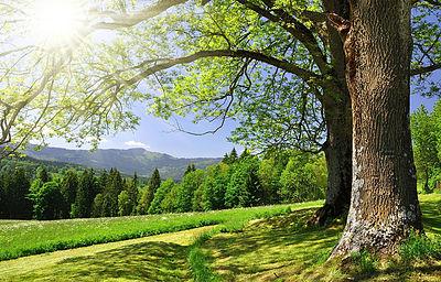 Afbeelding van boom